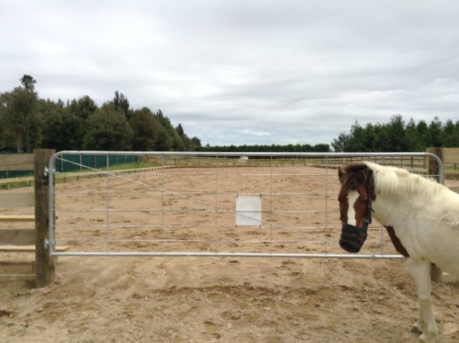 Dressage arena available with bookings