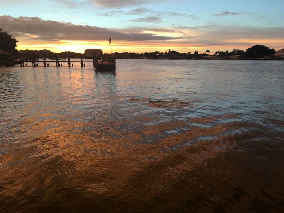 Dolphins swimming by the Dock. Enjoy manatee, dolphin, and sea life watching from the dock.