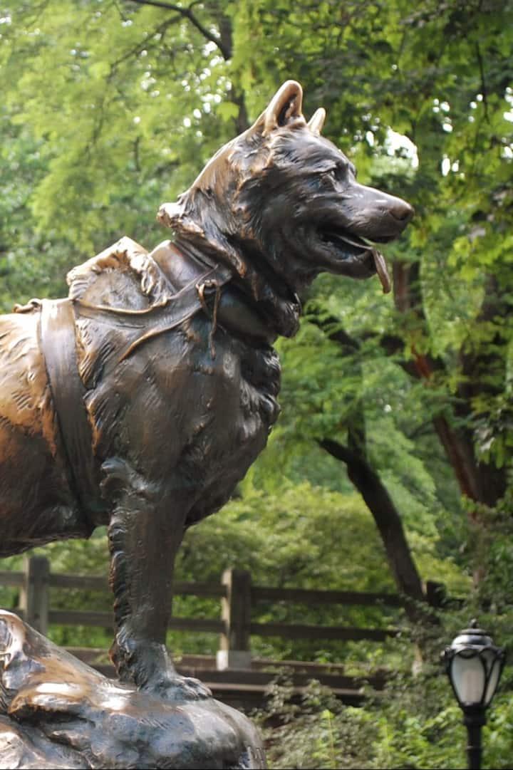 Balto Dog