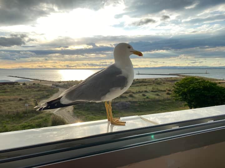 Studio front de mer avec vue mer panoramique !