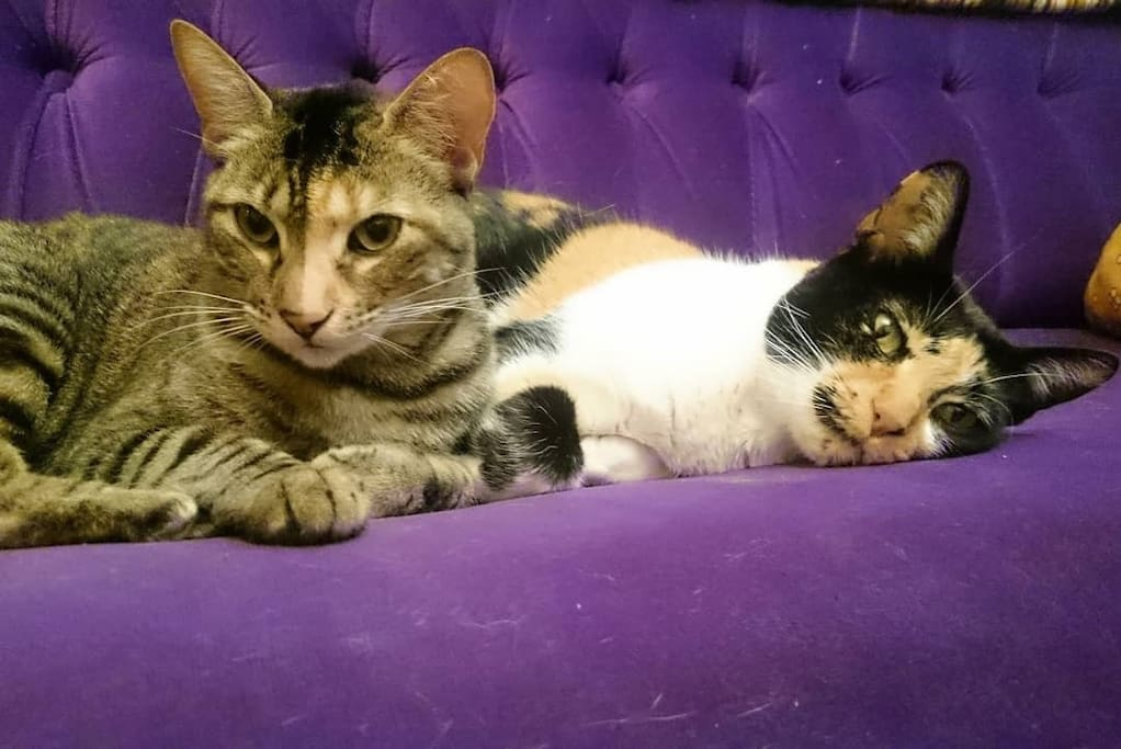 beautiful and nice cats in the company of home, Pippa & Tina.