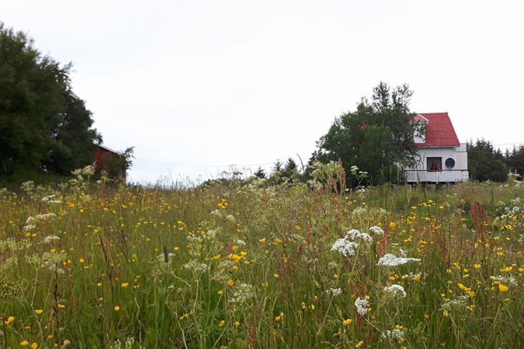 Huset sett fra veien.