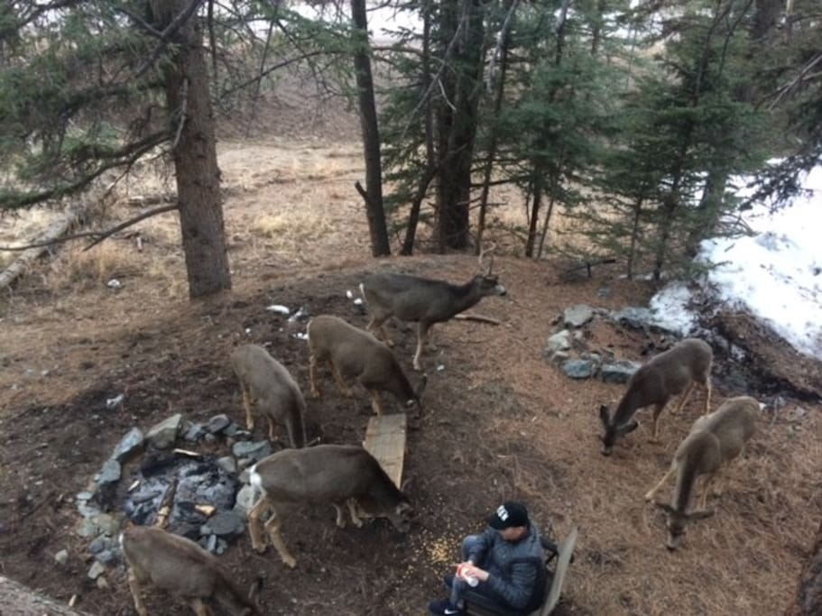 Deer around campfire of home.