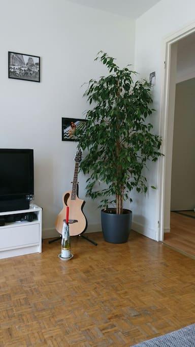 Phil' le Ficus.