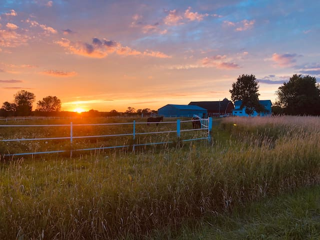 The Neubauer Ranch
