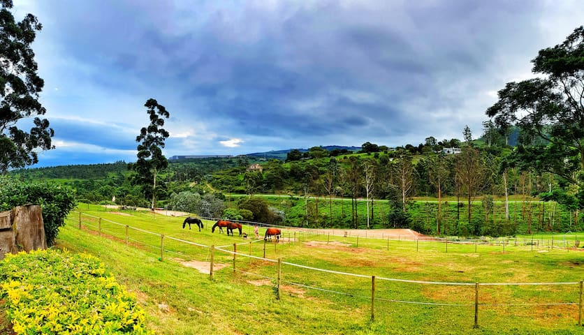 Cavalo Guest House & Equestrian Estate in Drummond
