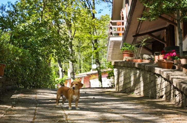 L'Agrifoglio Villa Francesca- Camera Quercia