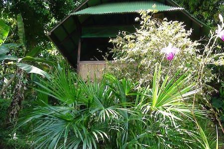 Pure Jungle Retreat !!