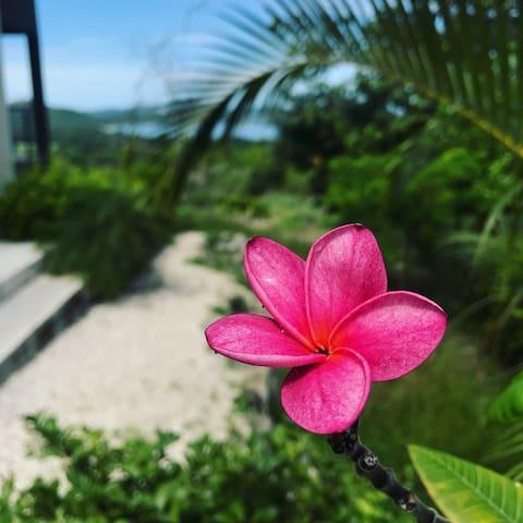 🌞Casita MARYPOSA Playa Potrero/Flamingo 4/4🏝