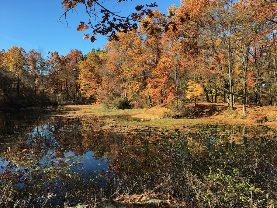 Public park with ponds, hiking-biking trails just behind the home.