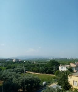 near the olive gardens and sea coast