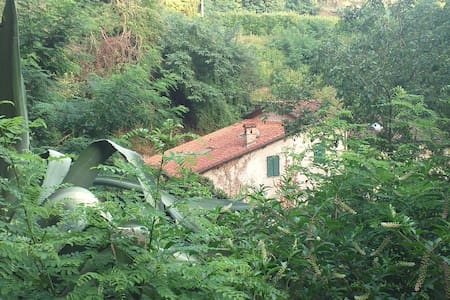 Quiet olive mill in the heart of Camaiore