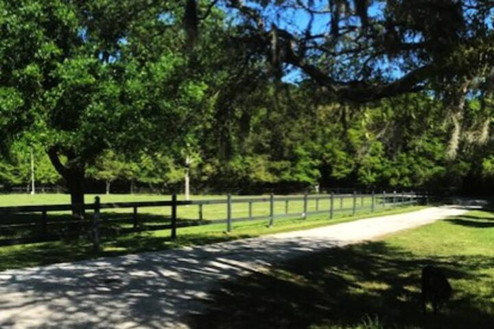 Johns Island Barn Sanctuary