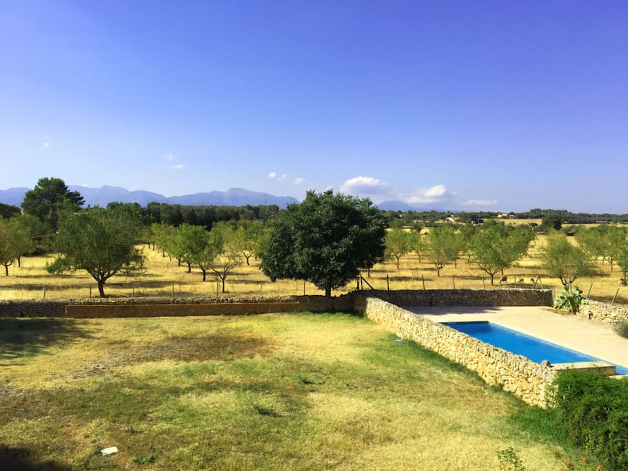 Private pool next to green garden embedded in beautiful almond fields.