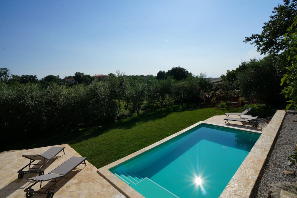 garden view surrounded by olive trees