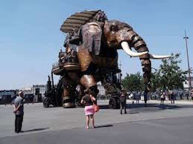 L'éléphant - Nantes - Flat
