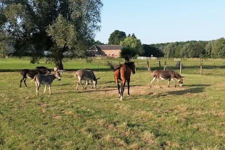 Les Mout'ânes chambre Cardamine - Avesnes-sur-Helpe