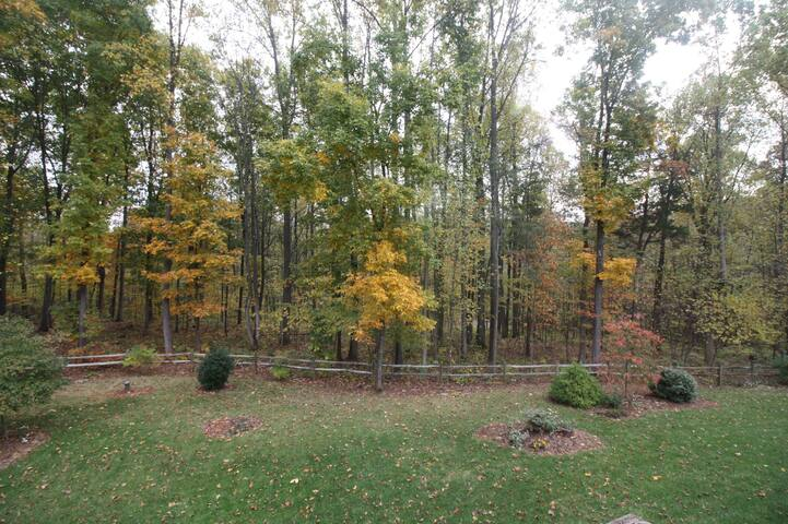 A view of the forest from the Ellisfield's 2nd story window.