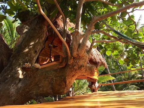 ENSUEÑOS. TreeHouse 2. Little Corn Island