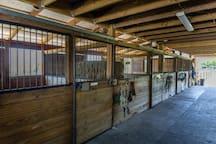 Moonshine Acres Tropical Horse Farm
