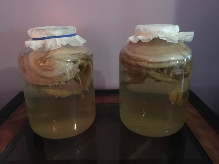 SCOBY in the brew