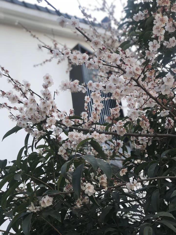 灵隐寺边最美的私家庭院独幢小墅-甘棠小院之安