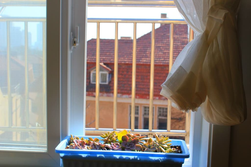 窗边肉肉萌哒哒,栖云雅客笑连连。