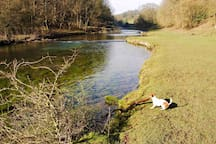 Little Titch our very popular Jack Russel pulling a branch from the river in Lathkill Dale.