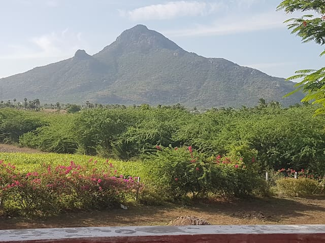 Magical Arunachala