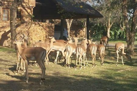 Kruger Park Lodge - Villa