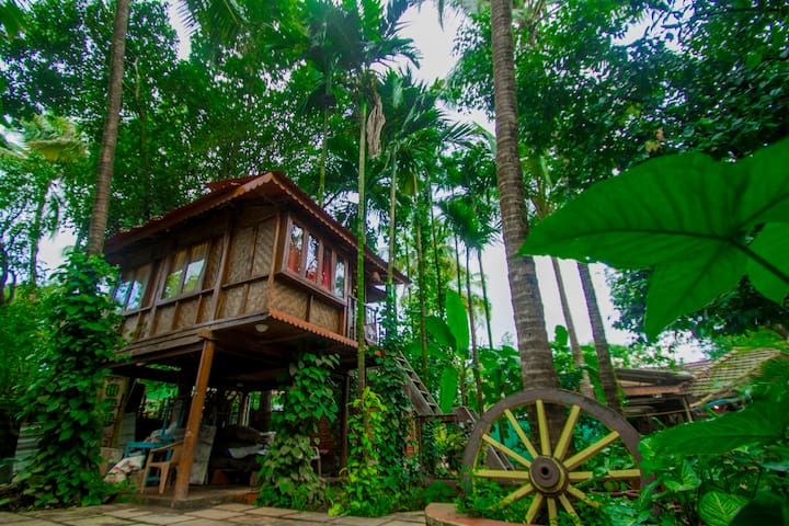 O'Nest Home Stay Tree House