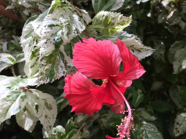 The Red Hibiscus, entire apartment - Kewarra Beach - Pis