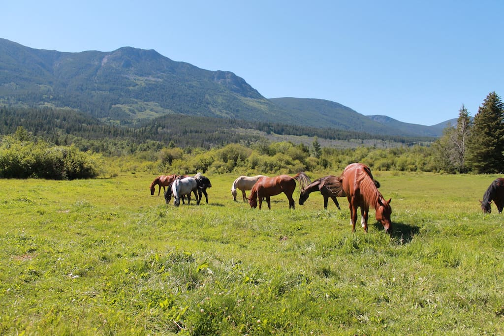 Some of our trail horses, awaiting for you.