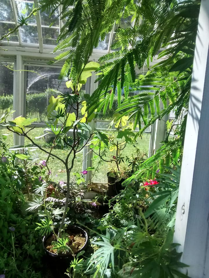 Glass house garden.