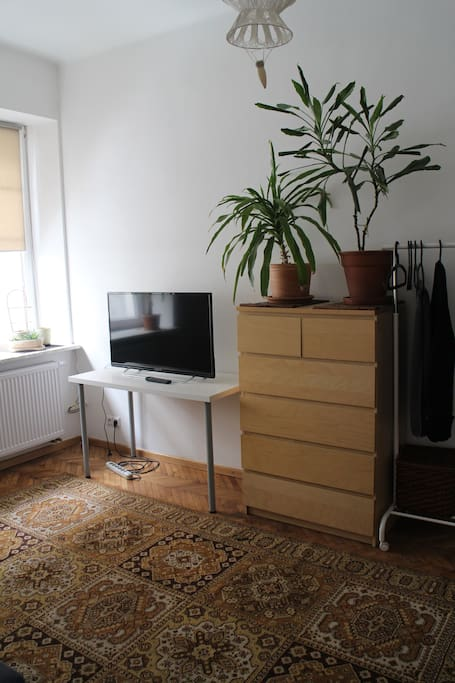 The television and plants