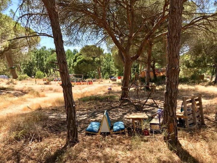 Caravan in Nature Camping