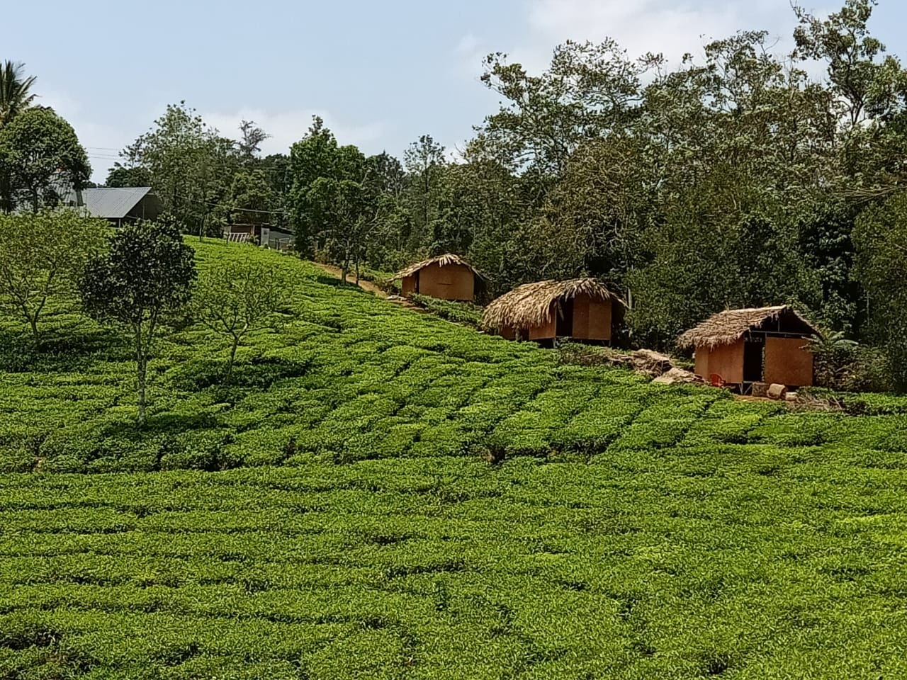 Distant view of the Eaglerock Holiday huts. Set to enjoy the panoramic view of the tea gardens.