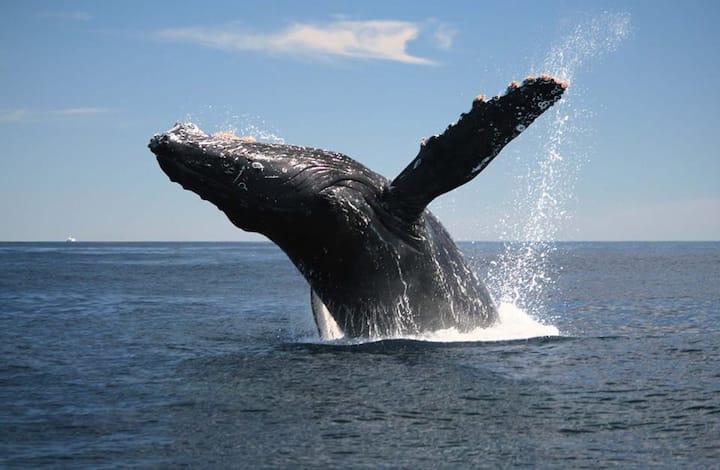 Llegaron las ballenas jorobadas!! 2 pax/noche $24