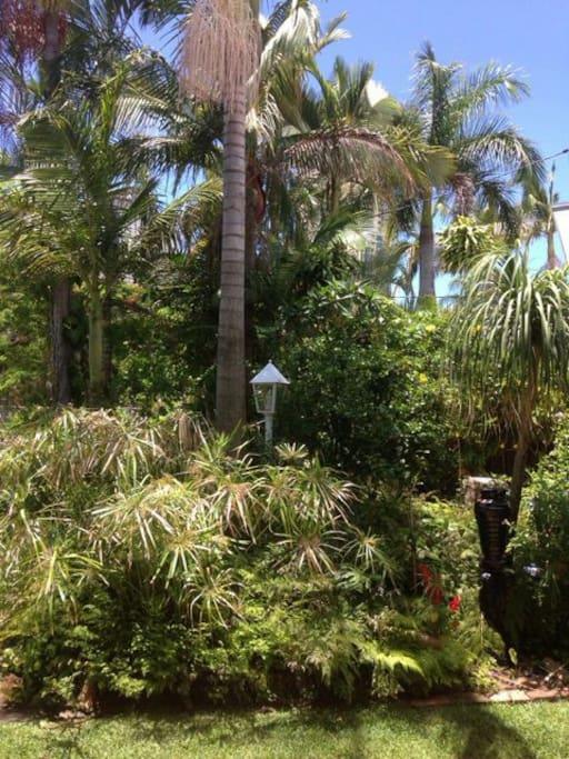 Beautiful Tropical Front Garden                               & Lawn.