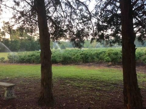 Magical time at Bluebela farm ! ( Blueberry Farm)