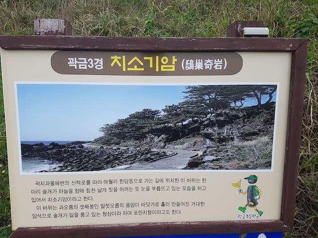 #고고애월 #애월항오션뷰 #도미토리(남성2-3인실)