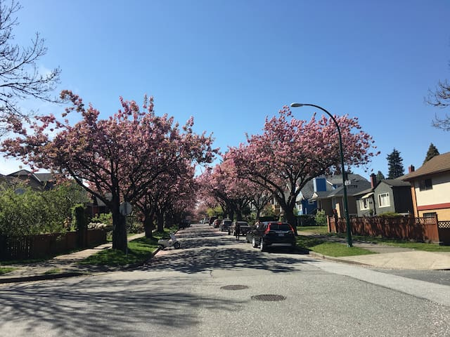 View from the street in spring