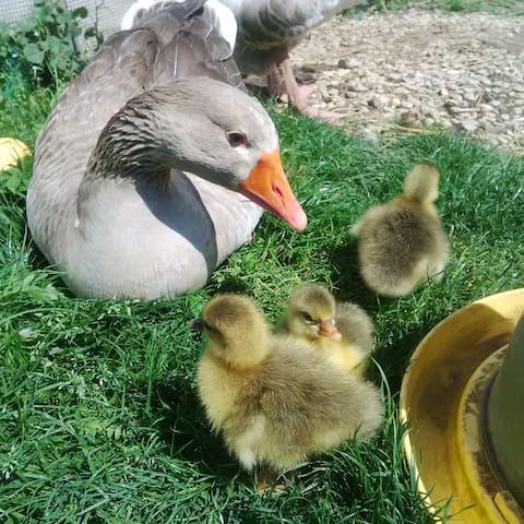 Des animaux en liberté dans notre jardin