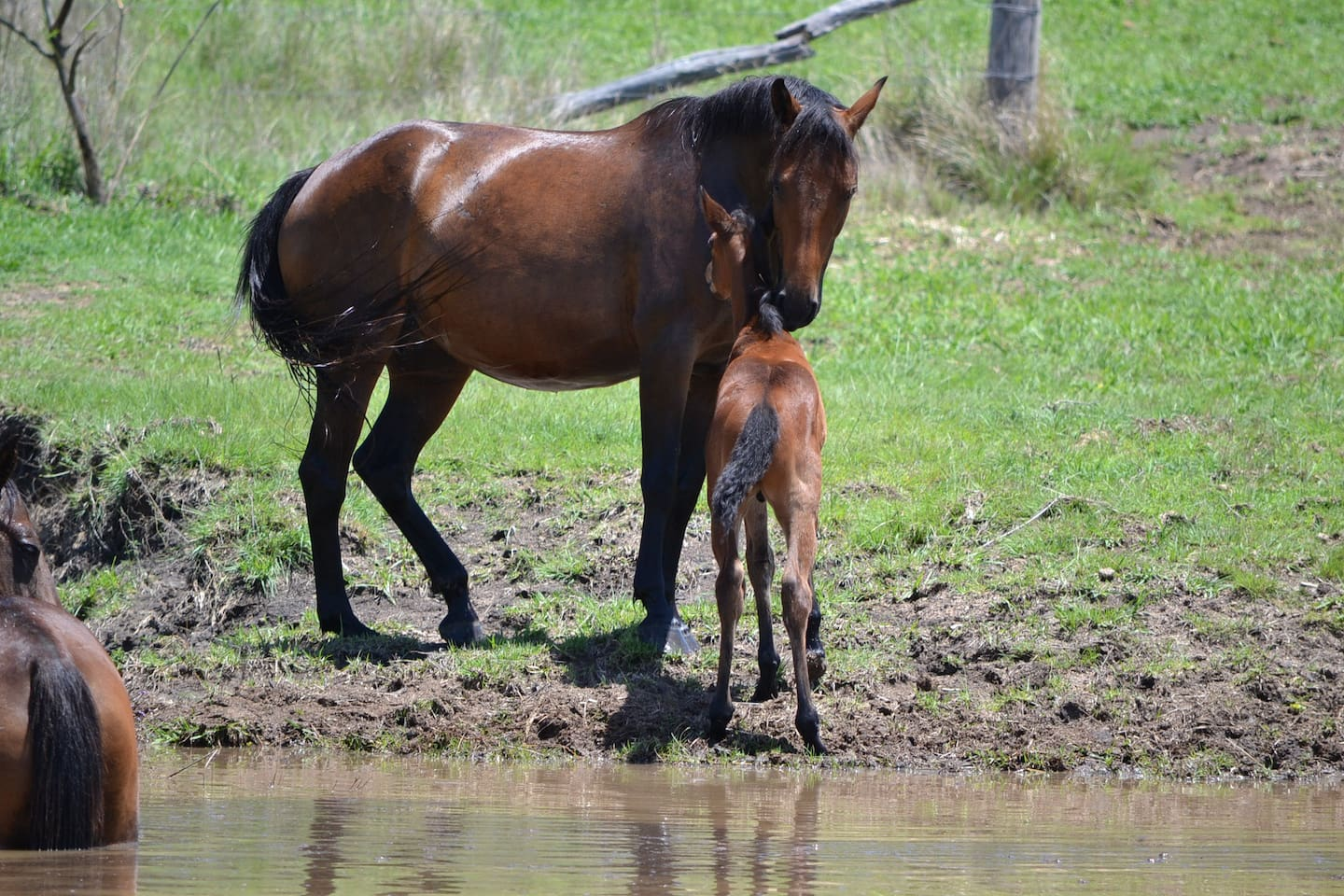 Foaling time!