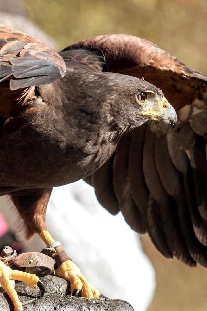 Meeting raptors up close will change the