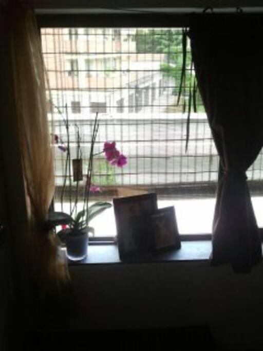 A window on a garden