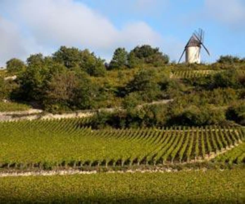 The Vineyard Route (SANTENAY To BEAUNE ) Starts And Finishes 500 Meters From The Gite