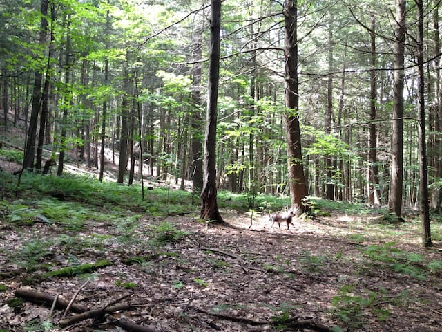 Camping in Forest Botanical Sanctuary