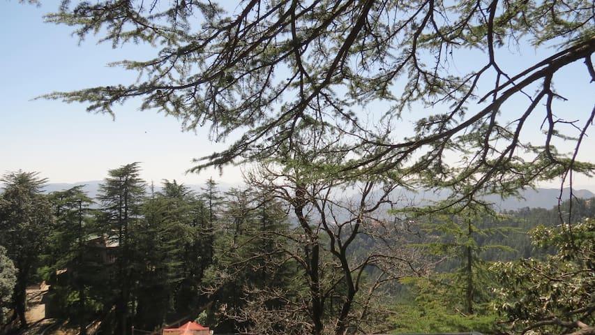Cedar Tree B&B - Shimla