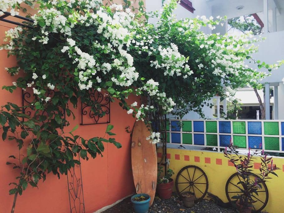 Pocket garden has trellis of bougainvillea that helps retain coolness in the living room. Fresh air everyday!